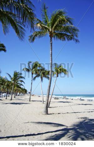 Bending Palm Beach