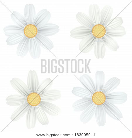 Set of isolated, white camomile, daisy. Vector flowers on white background, top view. Template for for t-shirt, fashion, prints and other design.