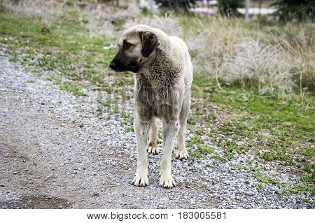 Cute and sweet standing dog, suitable for calendar leaves, dog pictures suitable for various projects,