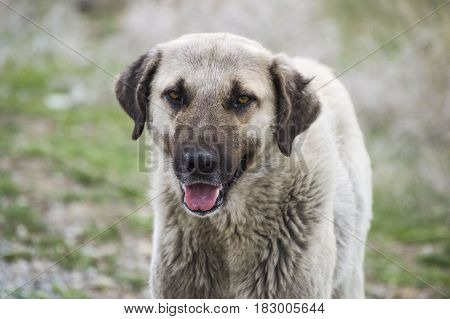 Portrait dog-head pictures, cute dog-look pictures, dog pictures suitable for calendar leaves