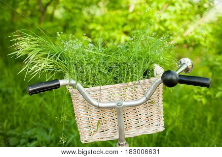 Photo Of Cute Helm Of Bicycle With Basket Full Of Green Bunch On The Wonderful Park Background