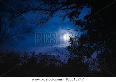 Silhouette Of Tree Against Night Sky With Beautiful Moonlight. Outdoor.