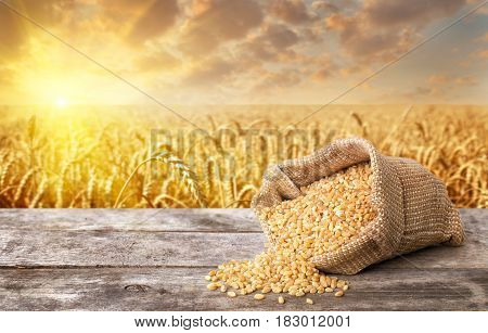 uncooked bulgur or couscous grains scattered out of the bag on table with field of wheat on the background.  Golden wheat field on sunset. Healthy eating for diet and vegan. Photo with place for text
