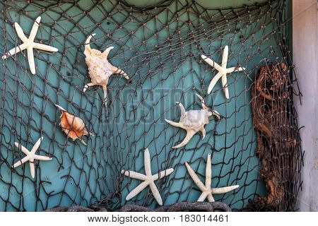 Fishnet background of mixed seashells with snails conch shells scallops clams and hermit crabs.