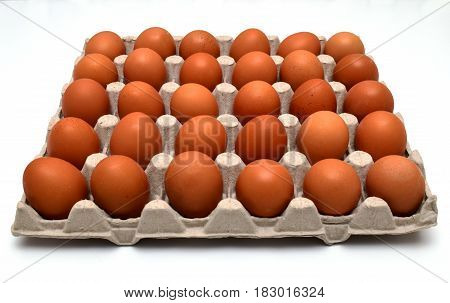 eggs in formwork tray front view on white background