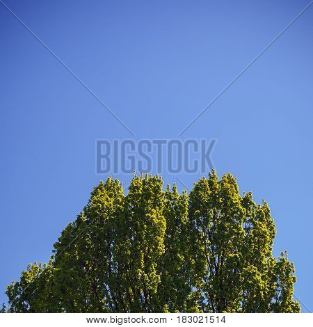 Treetop In Spring