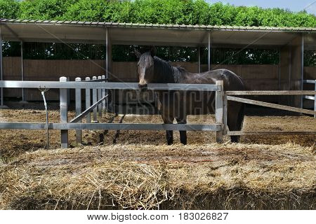 a pedigree horse in a outdoor stable