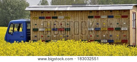 Truck with beehives for bees standing in the field. Collection of honey