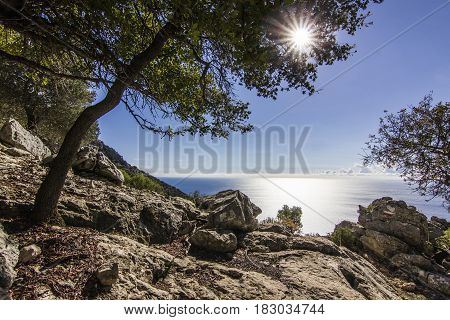 sun shining through leaves of green tree with blu sea on background