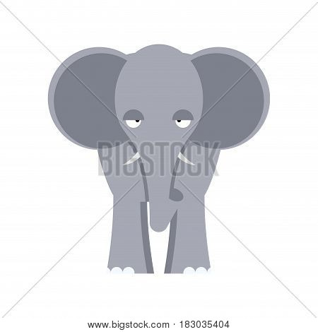 Elephant Front View Isolated. Big Wild African Beast On White Background