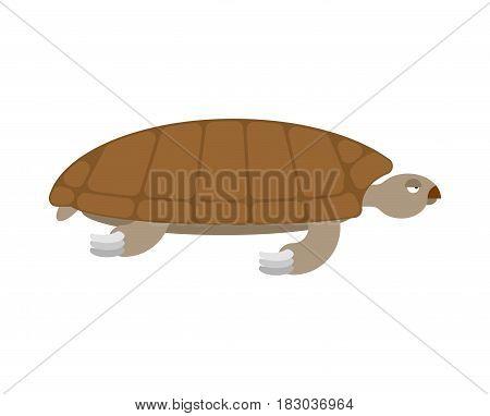 Sea Turtle Isolated. Sea Animal Terrapin On White Background