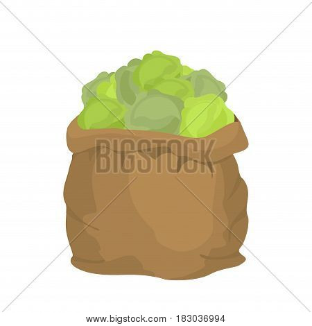 Cabbage Burlap Bag. Sack Of Vegetables. Big Crop On Farm. Sackful Cabbage