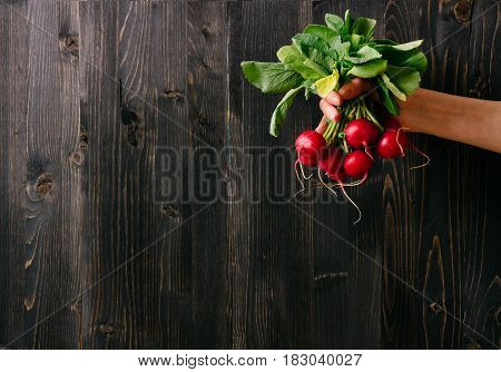 Organic Vegetables. Hands Holding Fresh Radish. Black Wooden Background With Copy Space