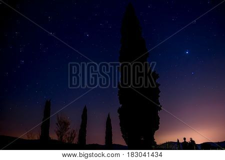 silhouette of a cypress after dusk with a starry sky