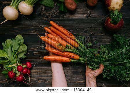 Organic Vegetables. Farmer's Hand Holding Harvested Carrots On The Dark Wooden Background, Top View