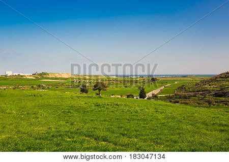 Beautiful spring meadow. Green field with tree and blue sky.