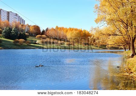 Beautiful autumn park. Autumn in Minsk. Autumn trees and leaves. Autumn Landscape. Park in Autumn. Forest in Autumn.