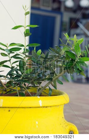 Close up of a plant in big yellow ceramic flowerpot