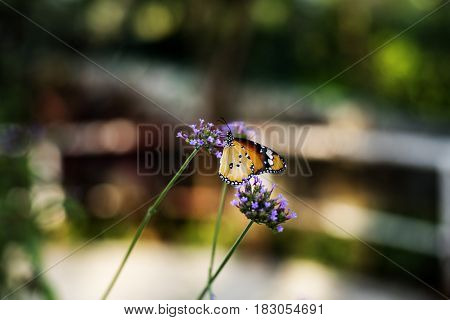Butterfly in Nature Blossom Flower