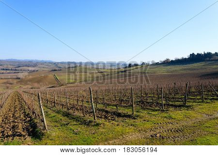Rows Of Vineyards From Tuscany Hills