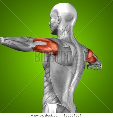 Concept or conceptual 3D illustration triceps human anatomy or anatomical and muscle on green background