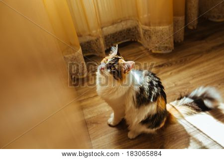 Cat Is Ready For Jumping. Warm Toning Image. Lifestyle Pet Concept.