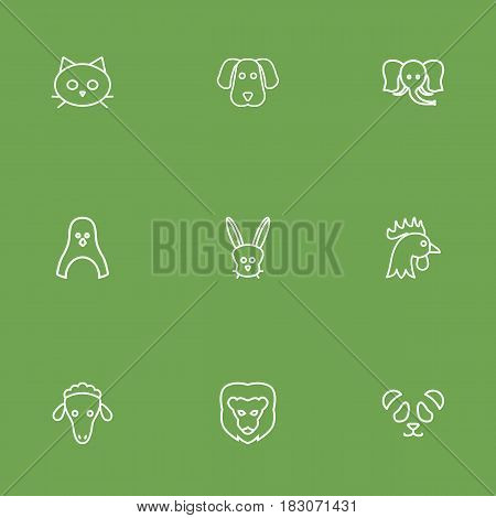 Set Of 9 Alive Outline Icons Set.Collection Of Dog, Rabbit, Feline Bear And Other Elements.