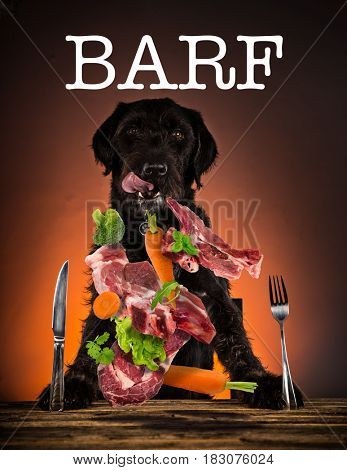 Hungry black mutt dog with fork and knife ready to eat dinner or lunch. Portrait photo.