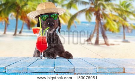 Black mutt dog posing on the beach with colorful cocktail.