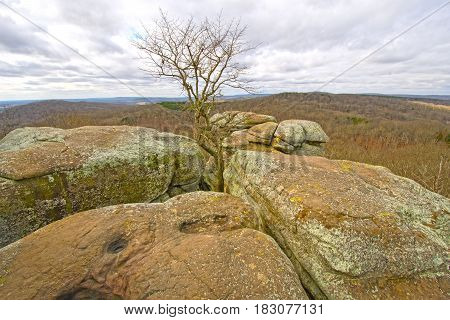 Lone Tree in the Rocks in Garden of the Gods in Shawnee National Forest in Illinois