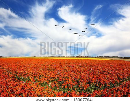 Strong wind drives the clouds. Migratory birds flying high in the sky. The southern sun illuminates the flower fields. Concept of rural tourism