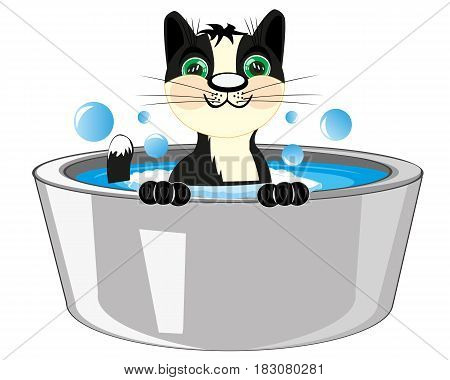 Black cat in capacities with water is washed