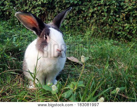 rabbit pose in green grass background .