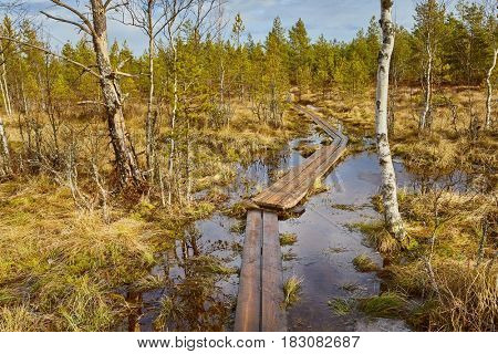 Walking trail in a swamp in Finland