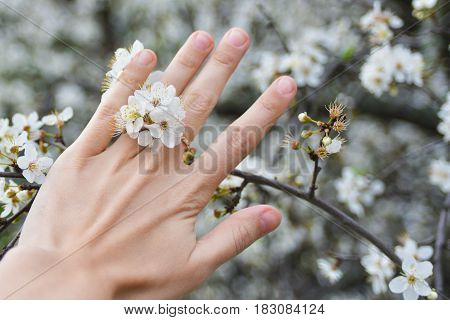blossoming cherry flowers on finger of left hand of white caucasian girl on background of cherry tree branches
