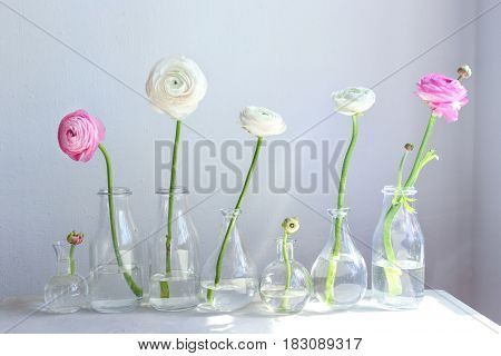 Glass vases with beautiful fresh ranunculus flowers on table