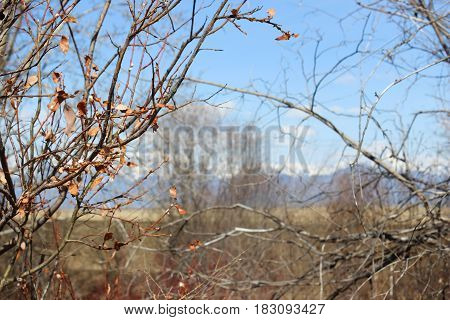 The branches of the shrubs in early spring