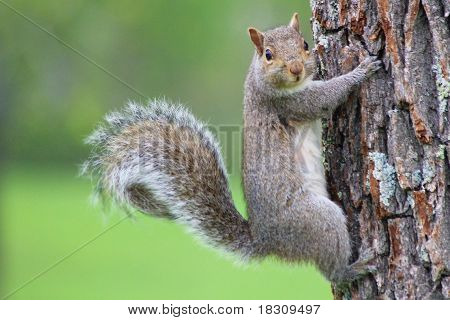 Guilty Squirrel in a Tree