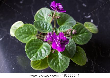Small Flower Of Violets