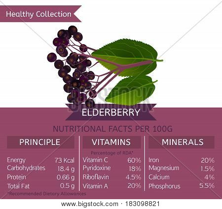Elderberry health benefits. Vector illustration with useful nutritional facts. Essential vitamins and minerals in healthy food. Medical, healthcare and dietory concept.