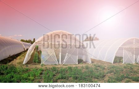 Polythene tunnel handmade greenhouse