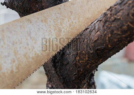 Hand Saw And Wood