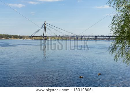 Wide river with two ducks in the foreground car cable-stayed bridge and railroad lattice truss bridge on the background in early spring