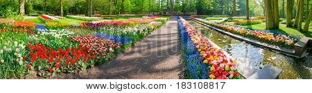 Panorama of the part of the garden with flower beds with tulips and other flowers beside to a small channel in Keukenhof Park