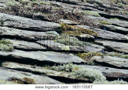Detail of flagstone slate with moss on the roof