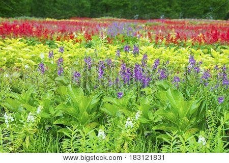 Landscape beautiful flowers in the garden Bogor West Java Indonesia
