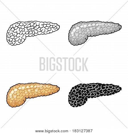 Human pancreas icon in cartoon style isolated on white background. Human organs symbol vector illustration.