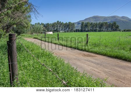 Farm dirt road in between two fence lines green alfalfa grass fields with pine trees and mountains in background on a bright sunny day