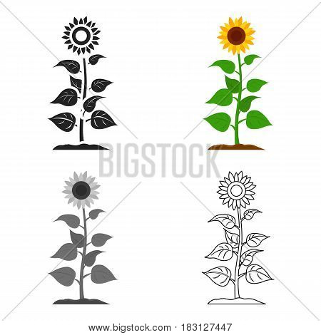 Sunflower icon cartoon. Single plant icon from the big farm, garden, agriculture cartoon.