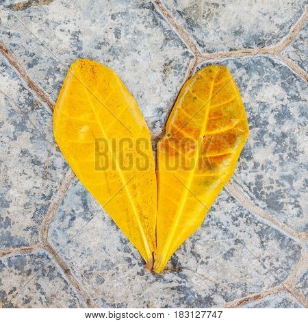 Yellow tropical plant foliage on grey stone background as love symbol